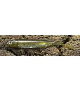 Fish Arrow Flash-J 4'' 10 cm kosan ayu - aurora