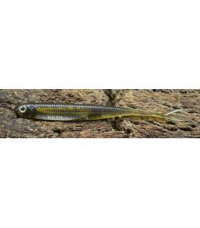 "Fish Arrow Flash-J Split 3"" purple weenie - silver"