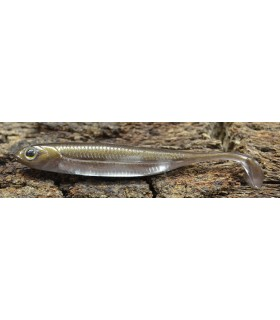 "Fish Arrow Flash-J Shad 4"" 10 cm wakasagi silver"