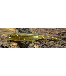 "Fish Arrow Flash-J 2"" 6cm kosan ayu aurora"