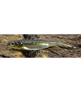 "Fish Arrow Flash-J 2"" 6cm wakasagi silver"